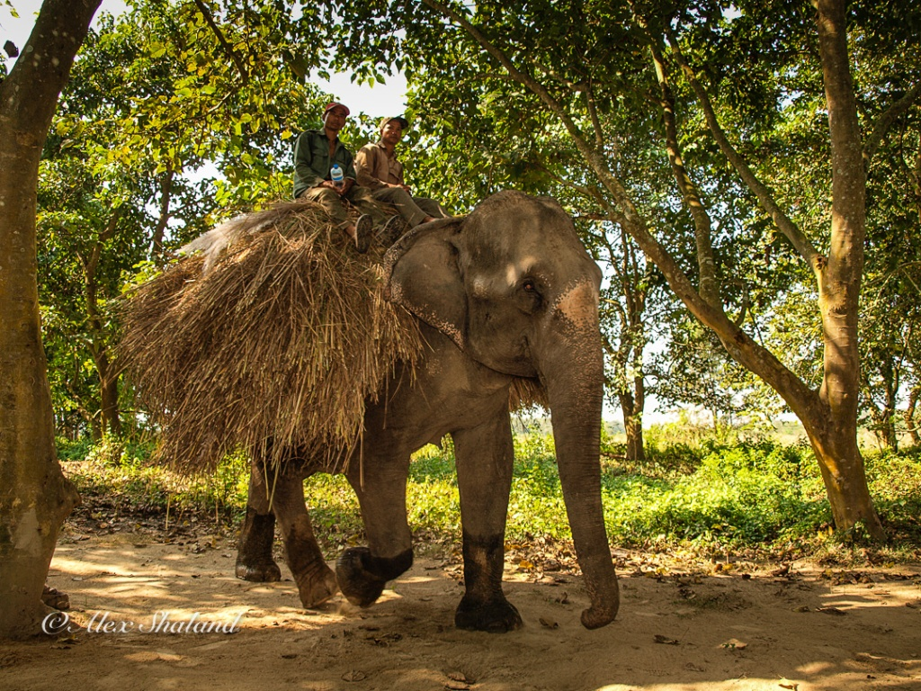 Elephant carrying load and riders in Chitwan National Park